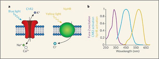 EPS Optogenetics